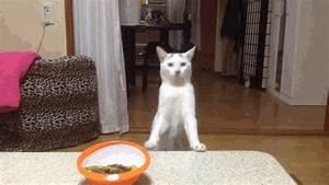 Cat Walking On Hind Legs Gif | www.pixshark.com - Images ...