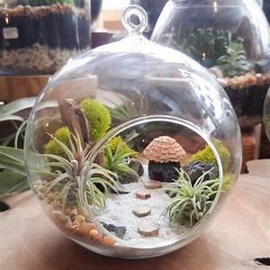 air plant terrarium kit diy miniaturlandschaft mit einer