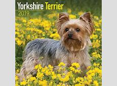 Yorkshire Terrier Calendar 2019 Calendar Club UK