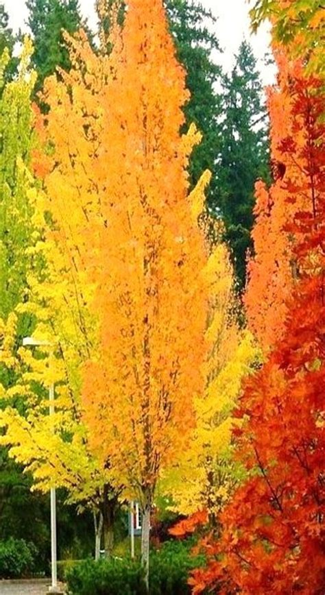 trees with fall color beautiful colors autumn pinterest