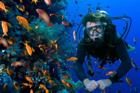 A Beginner's Guide To The Best Places for Scuba Diving in ...