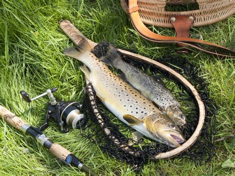 expert guide    fishing   trout bearcaster