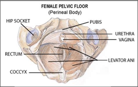health pelvic floor training