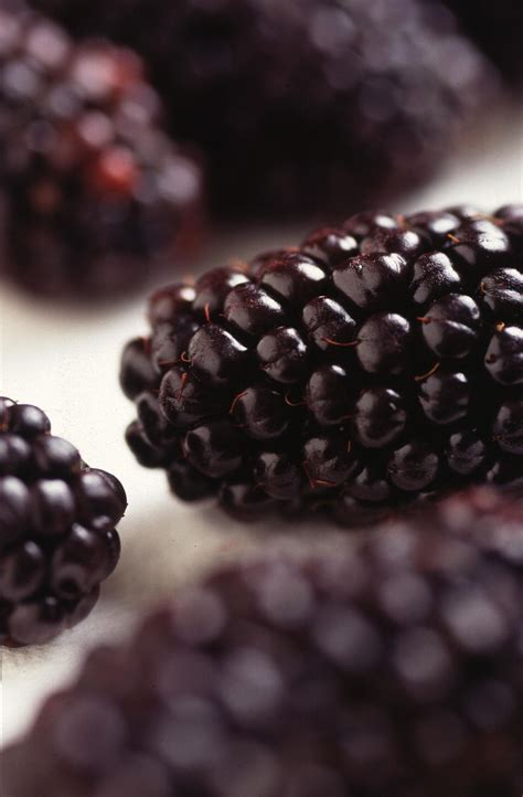 picture genetically modified blackberries