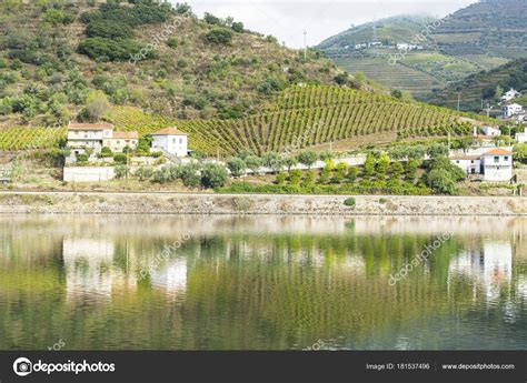 Fluss In Portugal by Weinberge Der Region Fluss Douro Portugal