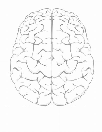 Brain Coloring Youcubed