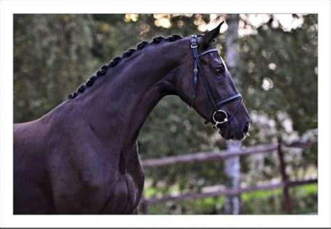 expensive horses  sale cost  life