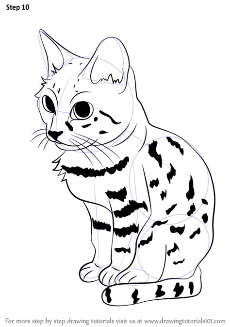 learn   draw  black footed cat wild animals step
