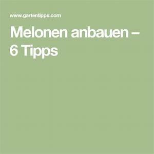 Wassermelone Anbau Balkon : die besten 25 melonen anbauen ideen auf pinterest anbau von gem se in t pfen b ume in t pfen ~ Watch28wear.com Haus und Dekorationen