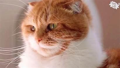 Kitten Noel Mine Kitty Cat