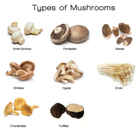 types of mushrooms types of wild mushrooms pictures to pin on pinterest pinsdaddy