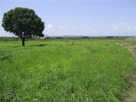 Panoramio - Photo of South Sudanese landscape