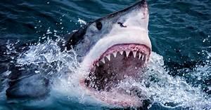Teacher  U0026 39 Eaten Alive By Great White Shark As He Spear