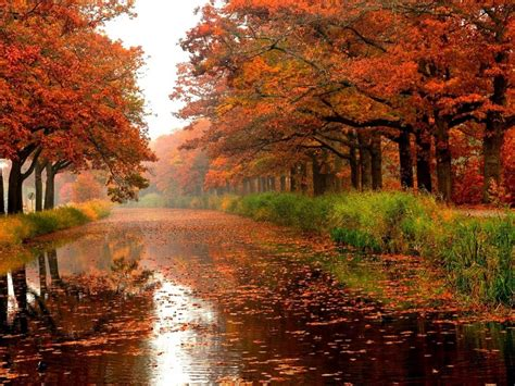 autumn river trees colours leaves nature forests hd