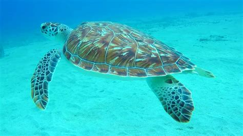 scuba diving curacao july  youtube
