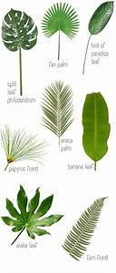 25+ best ideas about Tropical leaves on Pinterest ...