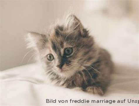 blasenentzuendung bei katzen ursachen symptome behandlung