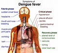 Beware of Dengue Fever Outbreak in Vietnam – Travel ...