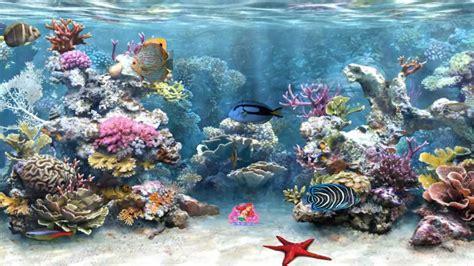 clear aquarium animated wallpaper httpwww