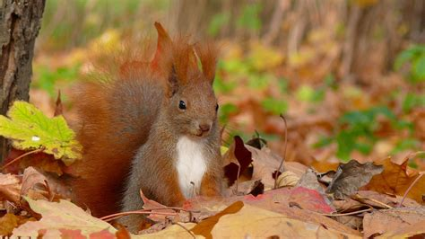 Fall Animal Wallpaper - fall with animal hd pc wallpapers 4103 amazing wallpaperz