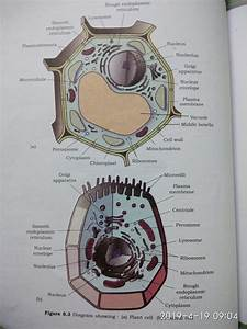 Draw A Well Labelled Diagram Of Plant Cell Or Animal Cell