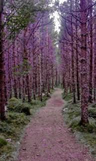 Moffat Scotland Purple Forest Jordan