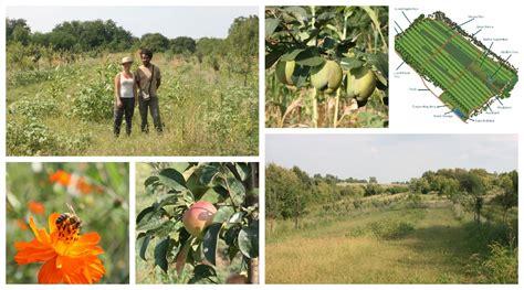 balkan ecology project  ha polyculture farm design