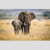 cute-baby-elephants