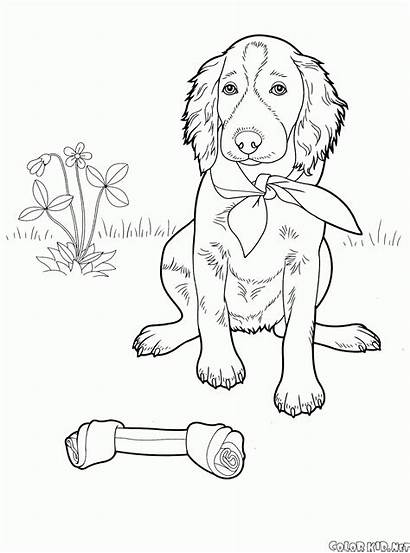 Coloring Dogs Pages Setter Dog Animals Views