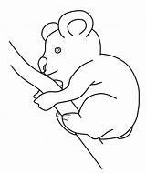 Koala Coloring Pages Printable Animal Animalplace sketch template