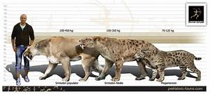 47 best images about Sabertooth Cats on Pinterest | Cats ...