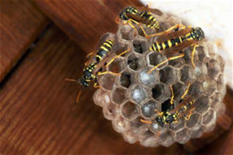 wespennest im rolladenkasten wespennest im rolladenkasten profis finden bewertet de