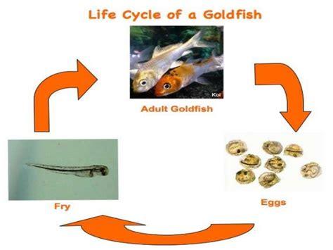 lifespan of a life cycle of animals