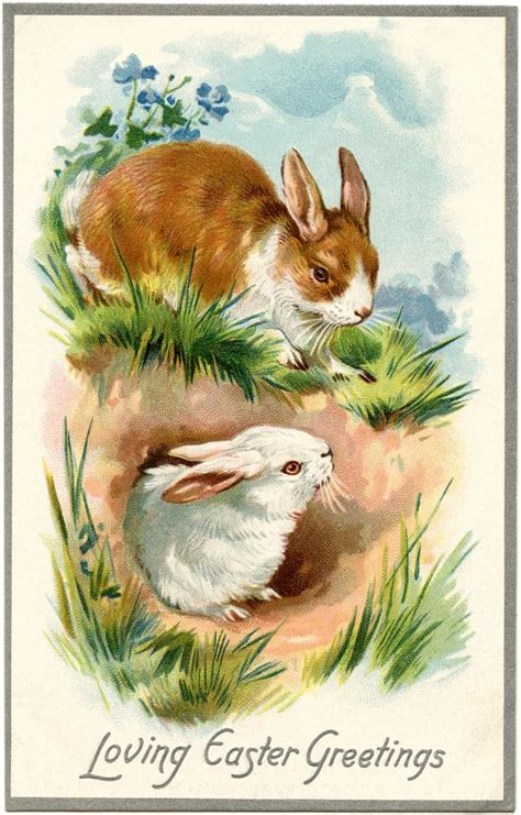 vintage easter bunnies card  graphics fairy