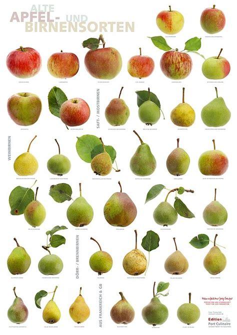 apfel und birnensorten pomologie pinterest