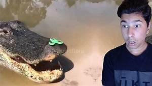 Hand Spinner Le Plus Cher Au Monde : un alligator fait du hand spinner youtube ~ Medecine-chirurgie-esthetiques.com Avis de Voitures