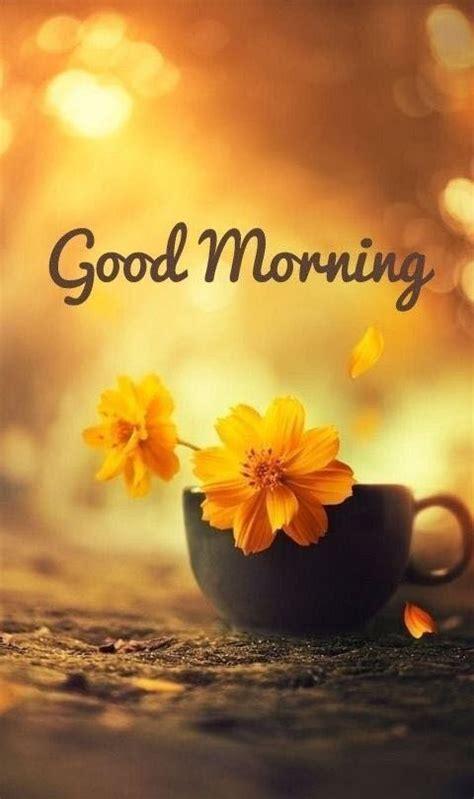 kostenlose guten morgen bilder für whatsapp guten morgen gr 252 223 e bilder bilder und spr 252 che f 252 r