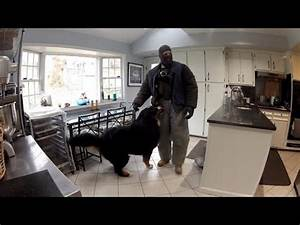 Watch This Fake Burglar Break Into Home To See How Dogs ...
