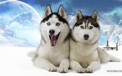 Animal Wallpapers Funny Desktop Wolf Animals Silly