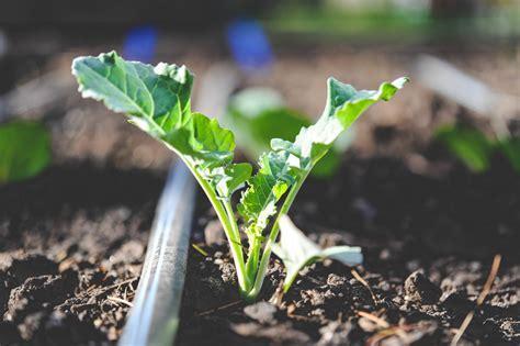 Why Drip Irrigation? ? Seattle Urban Farm Company