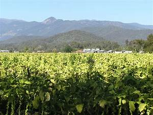File:MyrtlefordVic20050421gTobaccoCrop.JPG - Wikimedia Commons