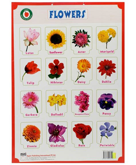 flower names the gallery for gt different types of flowers with names chart