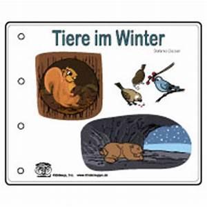 Vögel Im Winter Kindergarten : projekt tiere im winter kindergarten und kita ideen ~ Whattoseeinmadrid.com Haus und Dekorationen