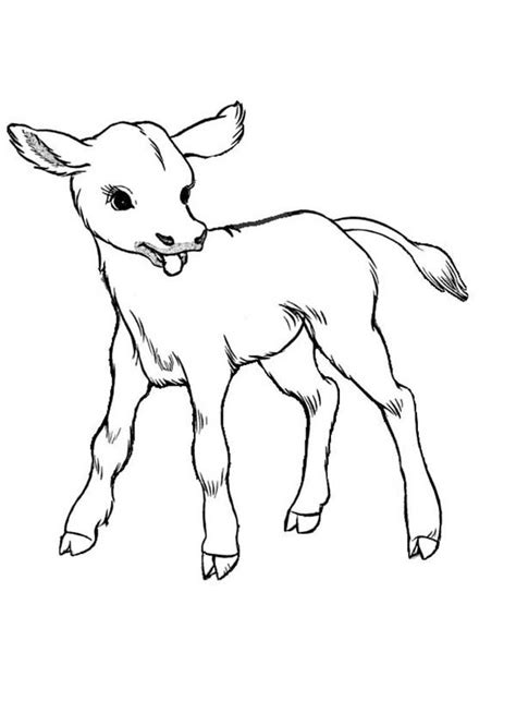 Cow, : Just Born Baby Cow Coloring Page | Cow coloring pages, Cow colour, Baby cows