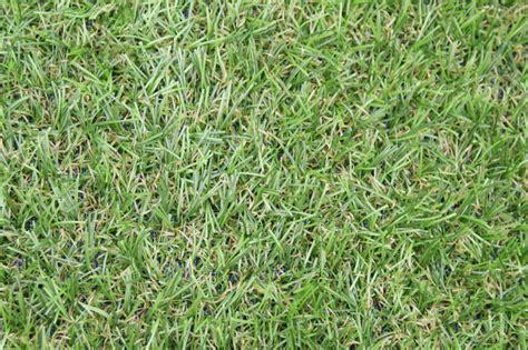 artificial grass by as good as grass as good as grass shop