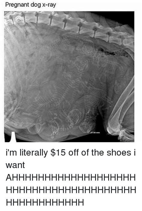 pregnant shoes literally dog ray memes want