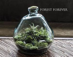Bonsai Im Glas : sony dsc planter i glas terrarium bonsai og terrarium jar ~ Eleganceandgraceweddings.com Haus und Dekorationen