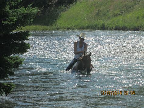 horses swimming ranch sweet