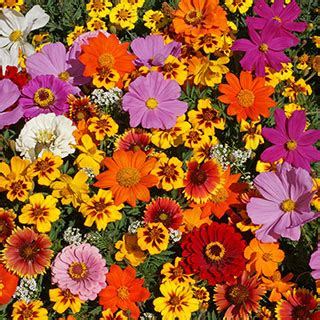 monarch butterfly wildflower mix  park seed