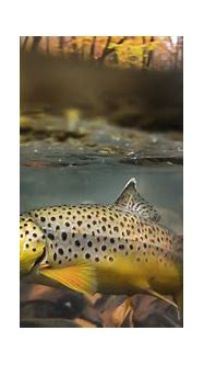 Winter fly fishing wallpaper for iphone - sizzurp and weed ...